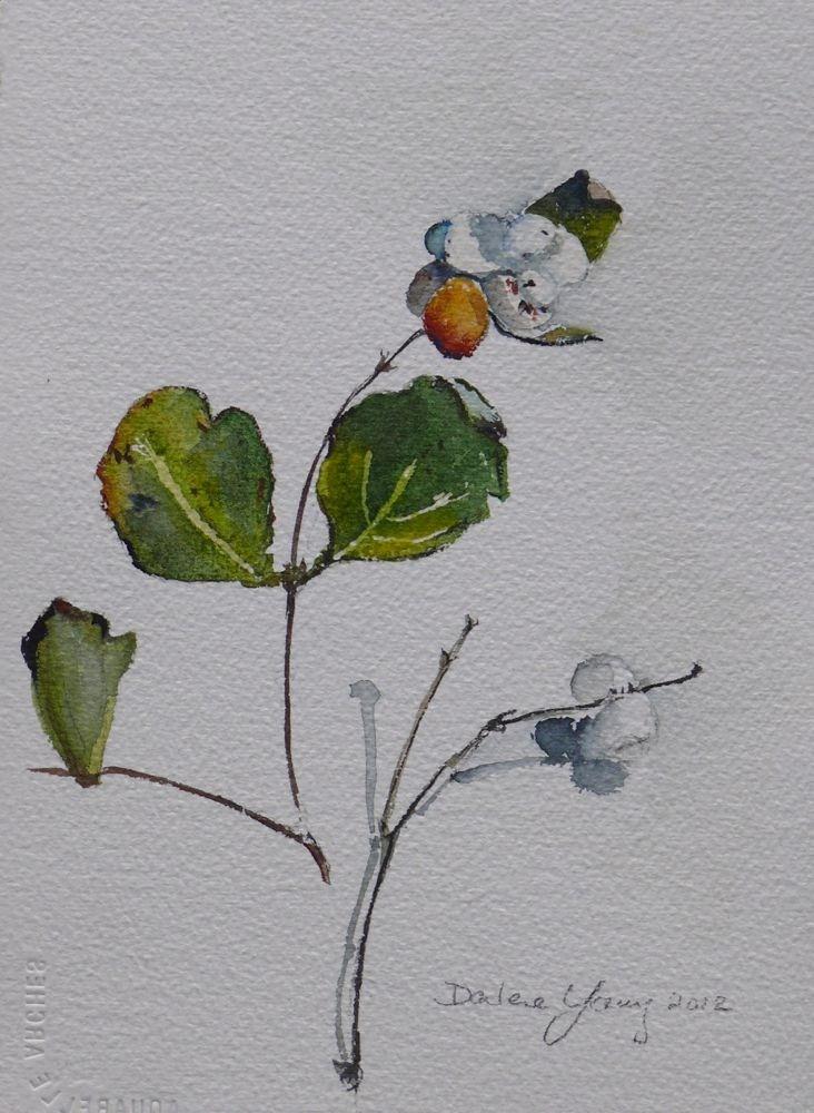 """566 Snow Berries"" original fine art by Darlene Young"