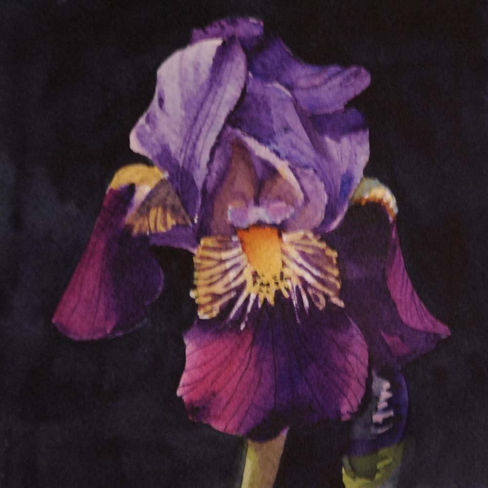 """April Iris"" original fine art by Mary Anderson"