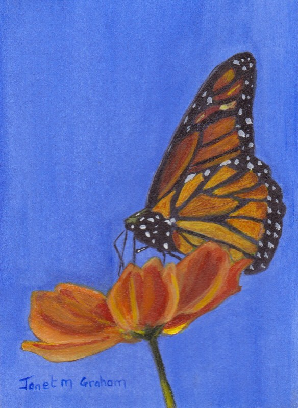 """""""Monarch Butterfly ACEO"""" original fine art by Janet Graham"""