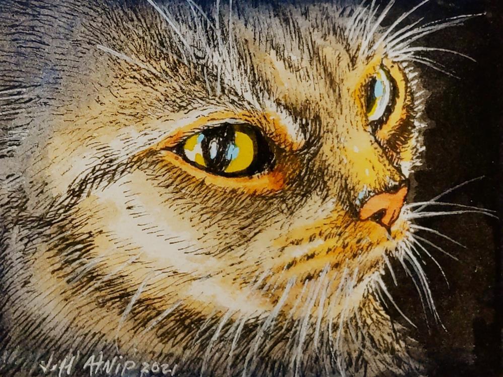 """Torty Tabby Closeup"" original fine art by Jeff Atnip"