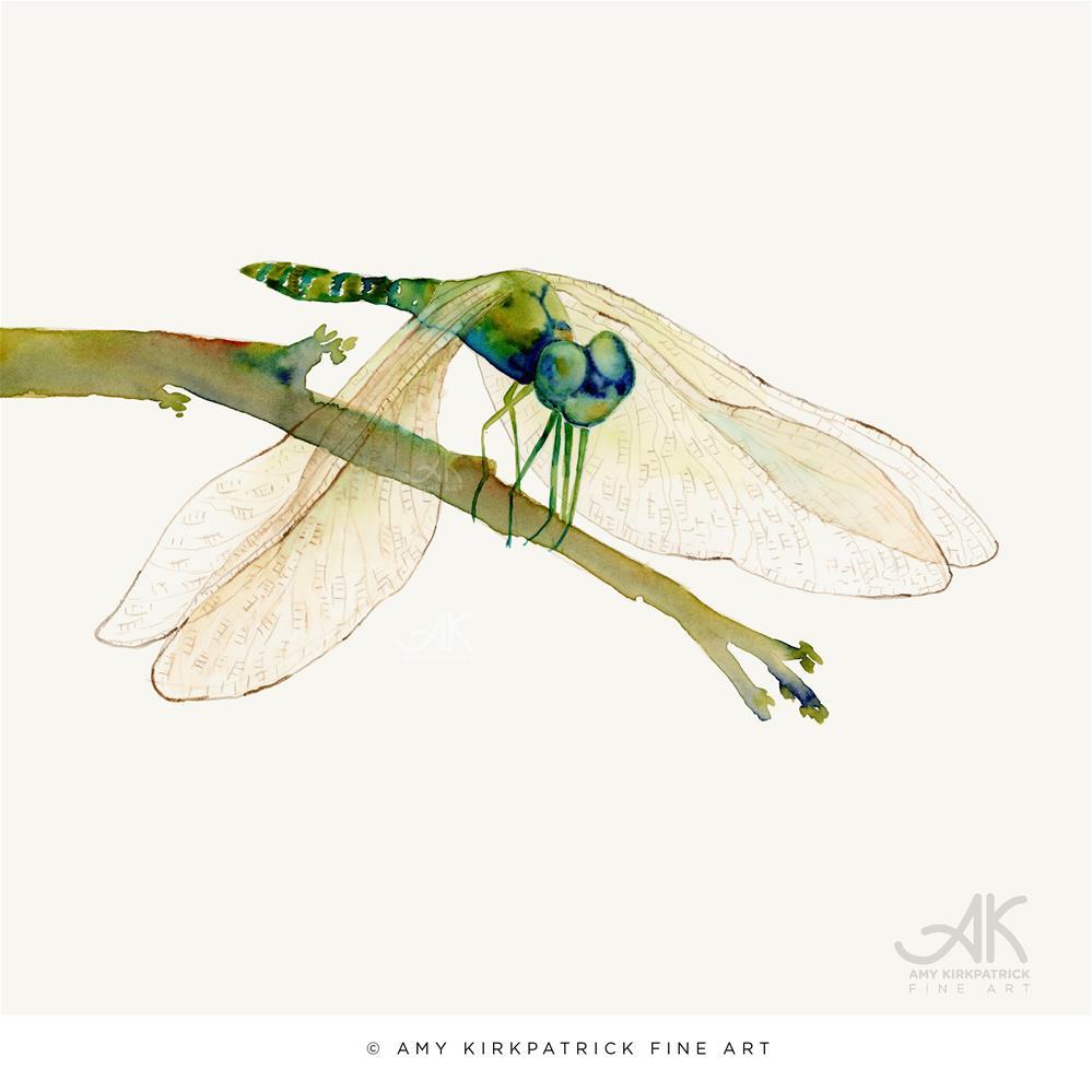 """GREEN DRAGONFLY #0452"" original fine art by Amy Kirkpatrick"