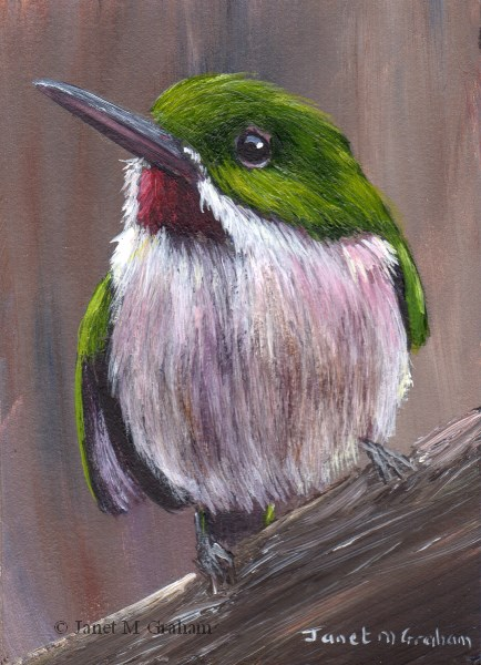 """Broad Billed Tody ACEO"" original fine art by Janet Graham"