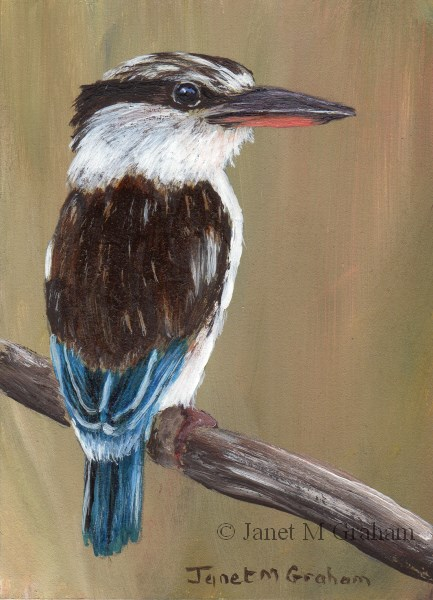 """""""Striped Kingfisher ACEO"""" original fine art by Janet Graham"""