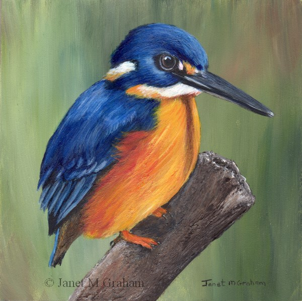 """Azure Kingfisher"" original fine art by Janet Graham"