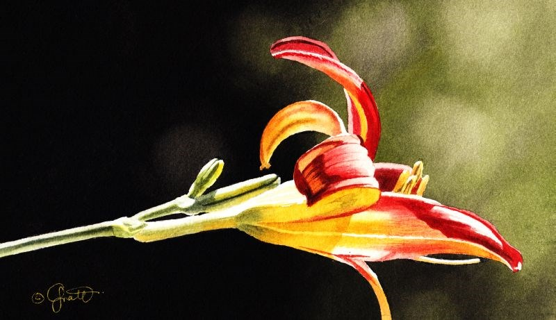"""""""Red & Yellow Lily"""" original fine art by Jacqueline Gnott, TWSA, WHS"""