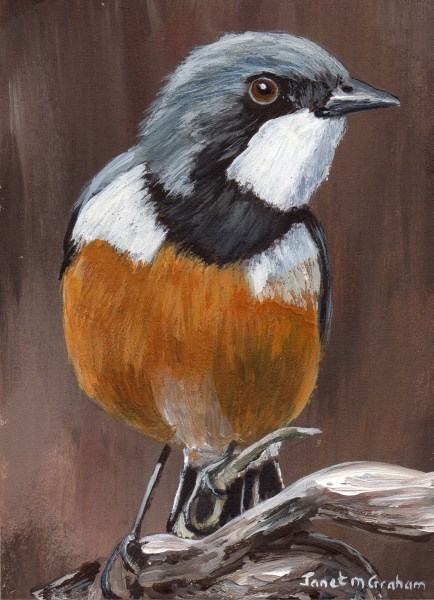"""""""Rufous Whistler ACEO"""" original fine art by Janet Graham"""