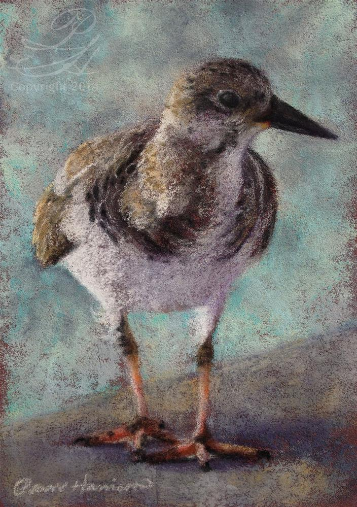 """Shore Bird 1"" original fine art by Pamela Hamilton"