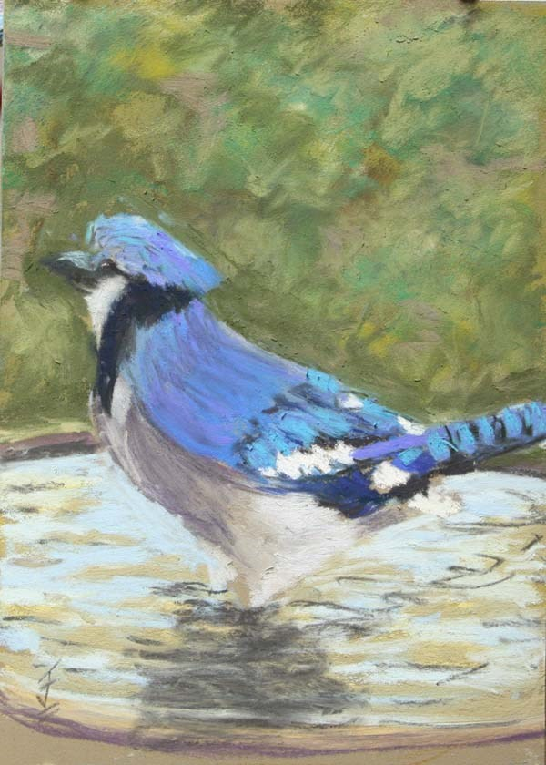 """Bathing Blue Jay"" original fine art by Jane Frederick"