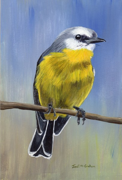 """Eastern Yellow Robin"" original fine art by Janet Graham"