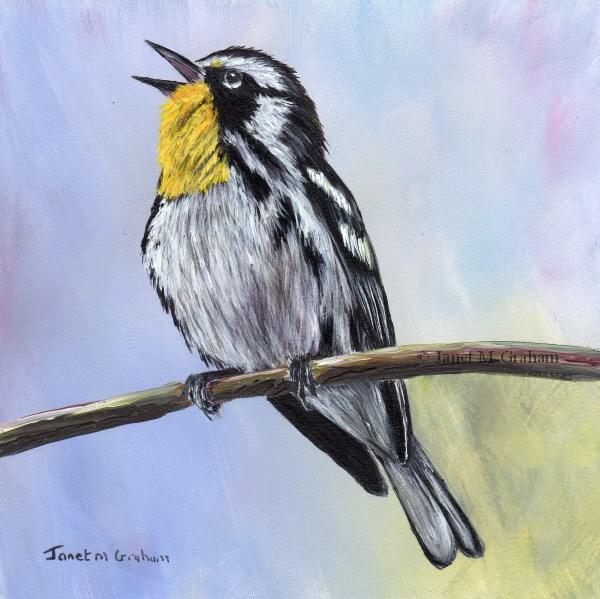 """Yellow Throated Warbler"" original fine art by Janet Graham"