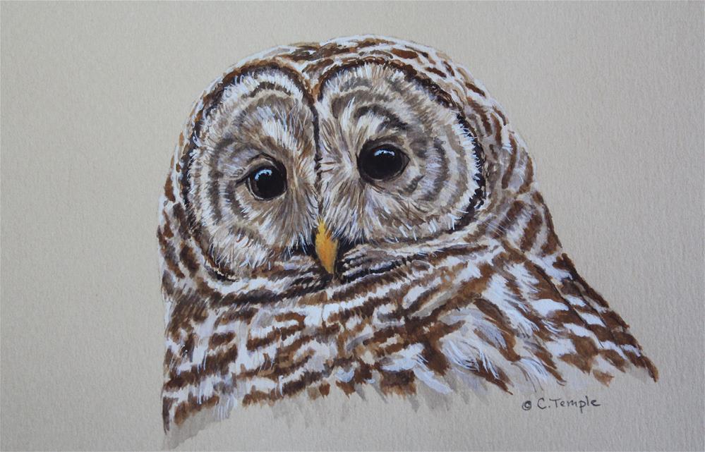 """Barred Owl"" original fine art by Catherine Temple"