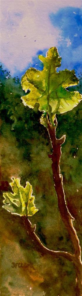 """Backlit Fig Branch"" original fine art by Judith Freeman Clark"