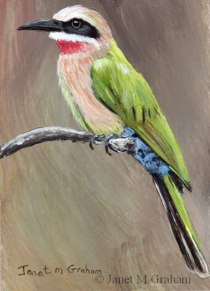"""""""White Fronted Bee Eater"""" original fine art by Janet Graham"""