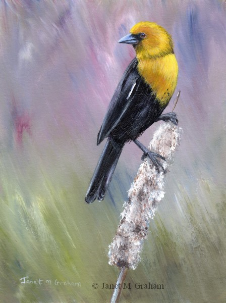 """Yellow Headed Blackbird"" original fine art by Janet Graham"