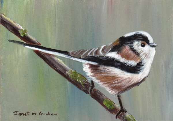 """""""Long Tailed Tit ACEO"""" original fine art by Janet Graham"""