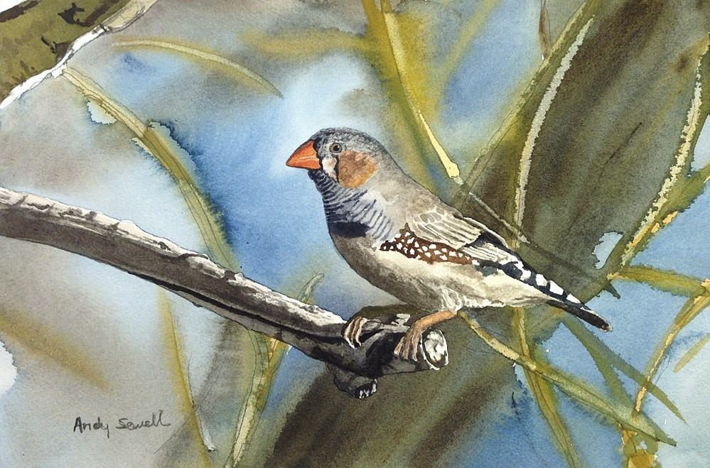 """""""Z is for Zebra Finch"""" original fine art by Andy Sewell"""