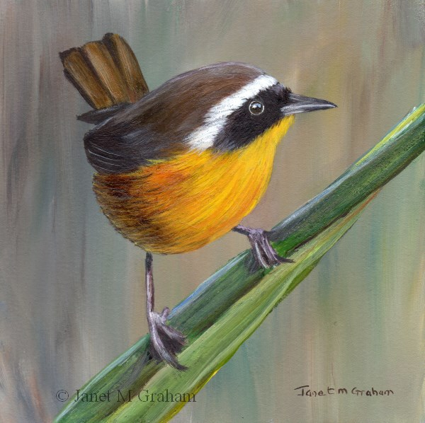 """Common Yellowthroat No 2"" original fine art by Janet Graham"
