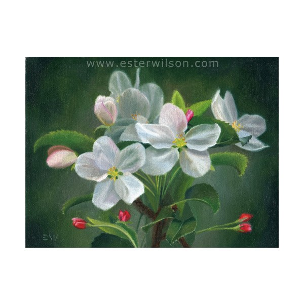 """Apple Blossom"" original fine art by Ester Wilson"