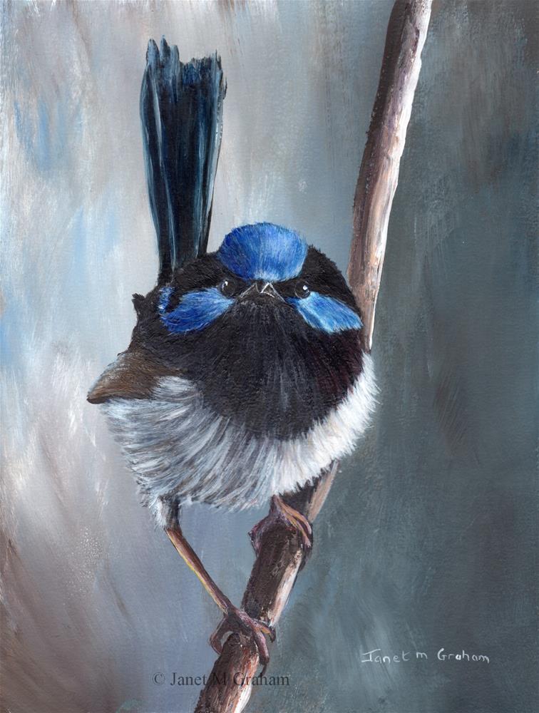 """Superb Fairy Wren No 8"" original fine art by Janet Graham"