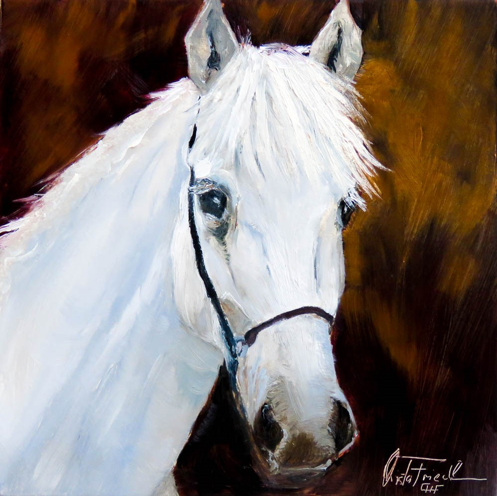 """Lipizzan Head Study"" original fine art by Christa Friedl"