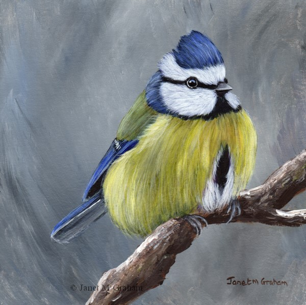 """Blue Tit No 8"" original fine art by Janet Graham"