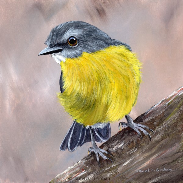 """Eastern Yellow Robin No 5"" original fine art by Janet Graham"