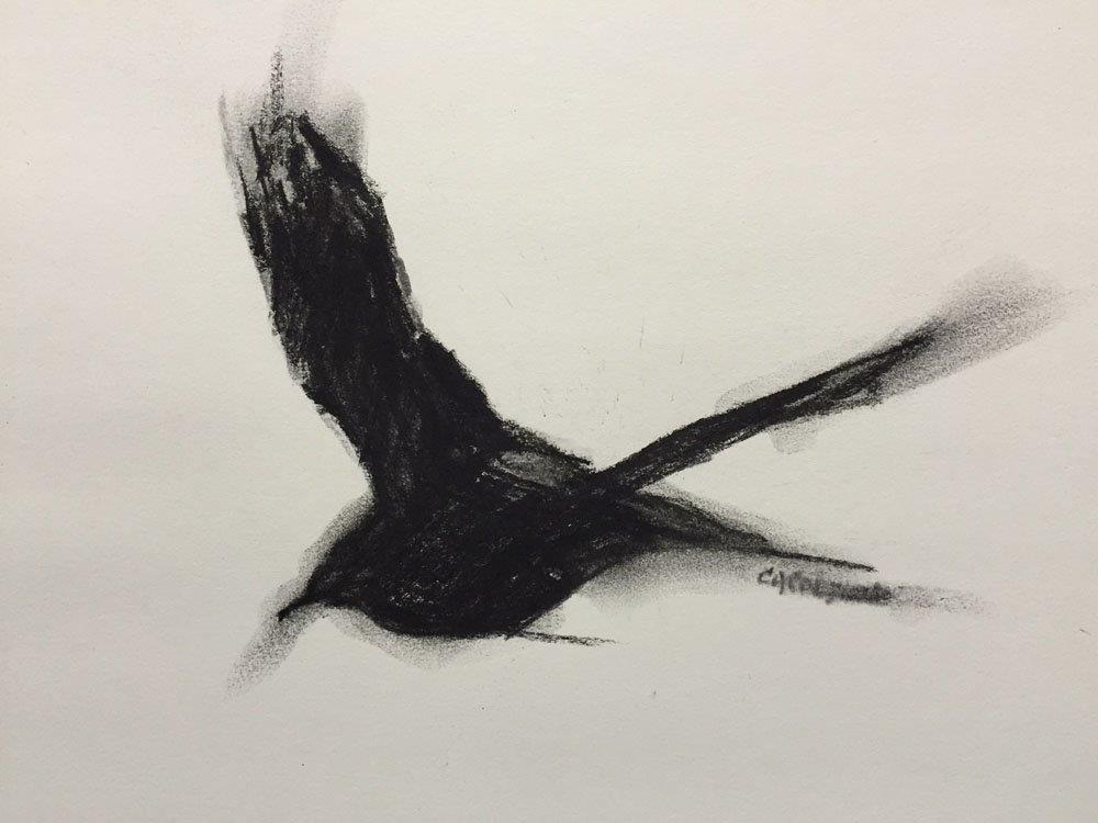 """Another Position - Crow Study"" original fine art by Carolynn Doan"