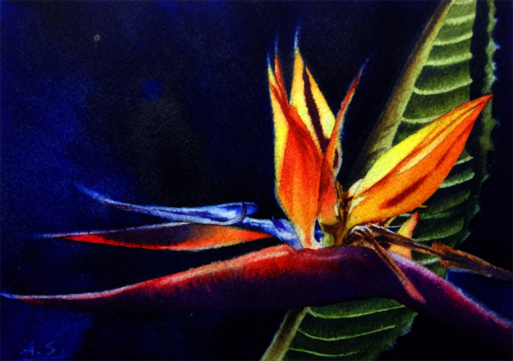 """Fire Bird"" original fine art by Arena Shawn"