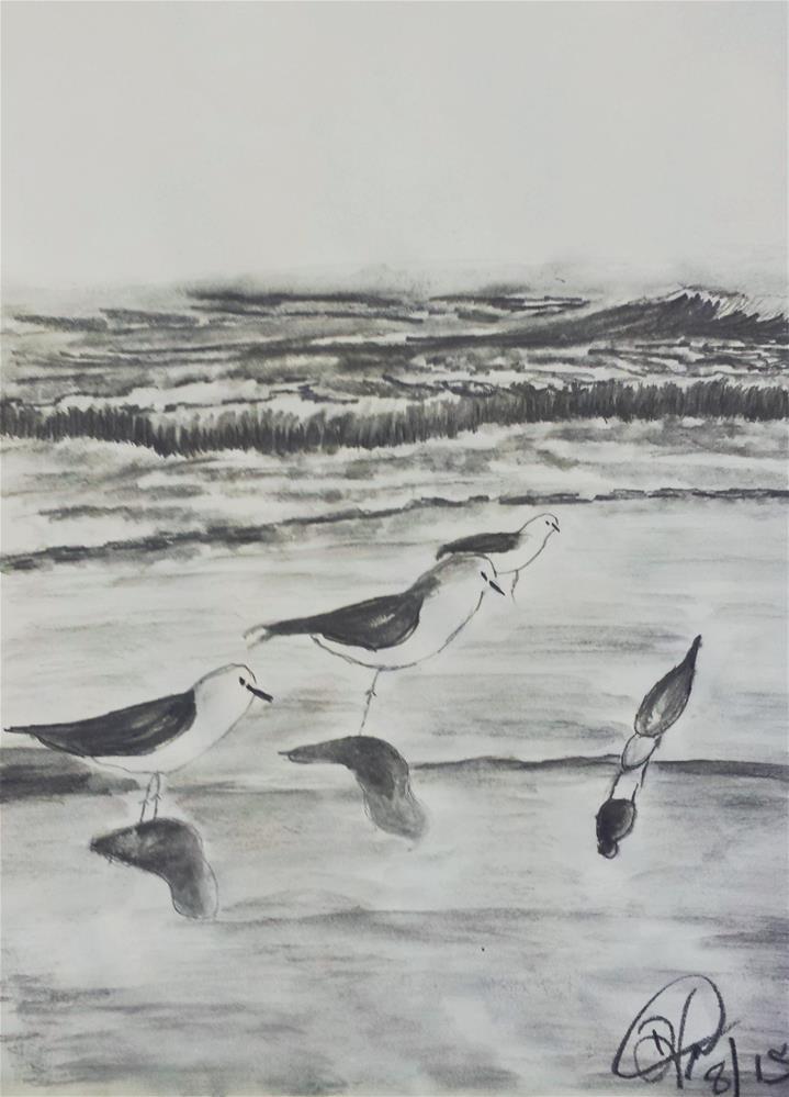 """Seagull Sketch"" original fine art by Donna Vieth"