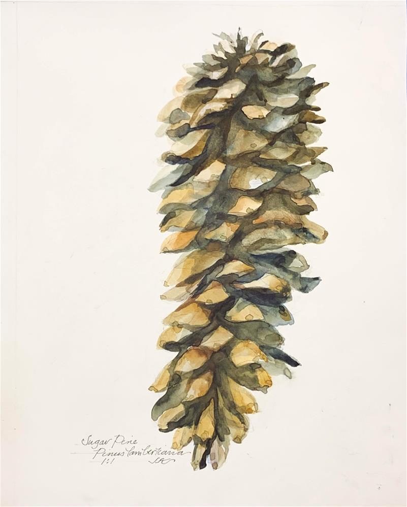 """Sugar Pine - Pinus lambertiana"" original fine art by Jean Krueger"