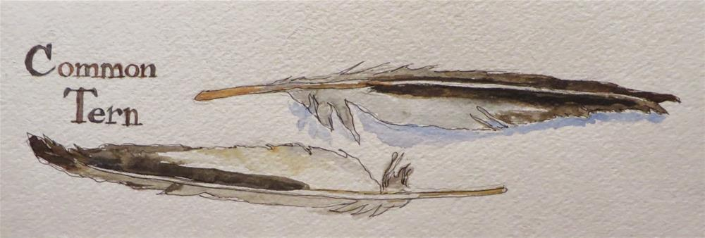 """609 Common Tern"" original fine art by Diane Campion"