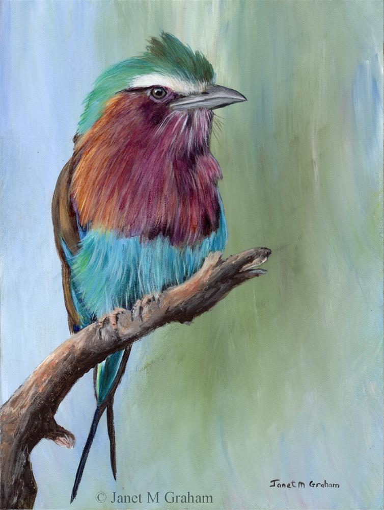 """""""Lilac Breasted Roller"""" original fine art by Janet Graham"""