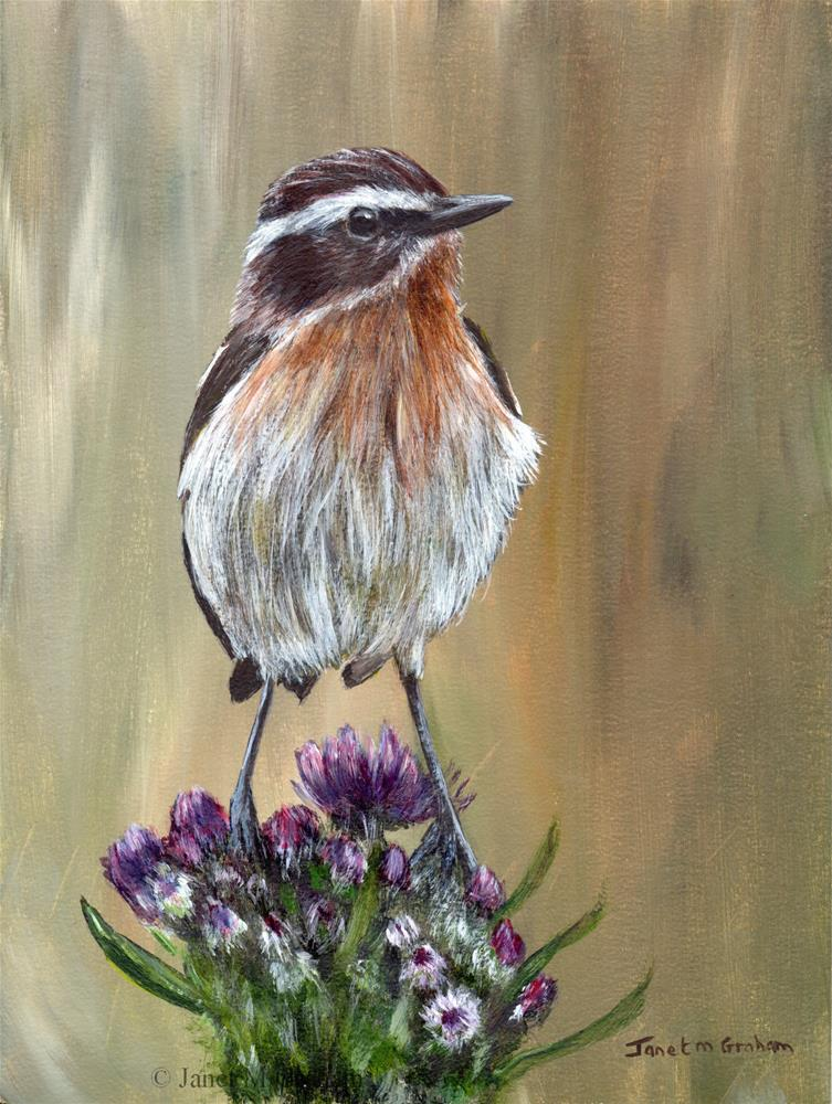 """Whinchat"" original fine art by Janet Graham"