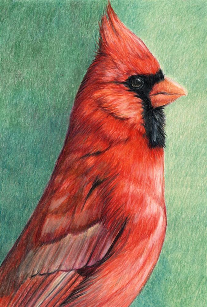 """Cardinal Profile"" original fine art by Charlotte Yealey"