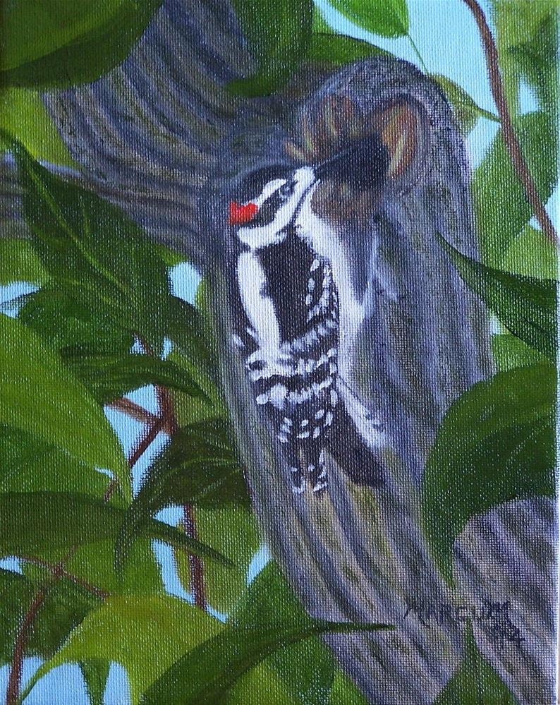 """Downey Woodpecker"" original fine art by John Marcum"