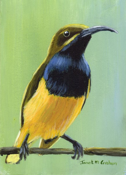 """""""Olive Backed Sunbird ACEO"""" original fine art by Janet Graham"""