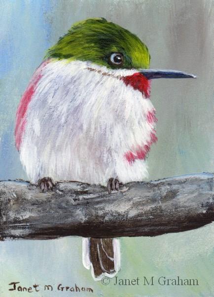 """Narrow Billed Tody ACEO"" original fine art by Janet Graham"