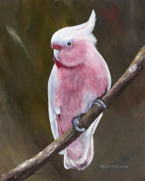 """Major Mitchell's Cockatoo"" original fine art by Janet Graham"