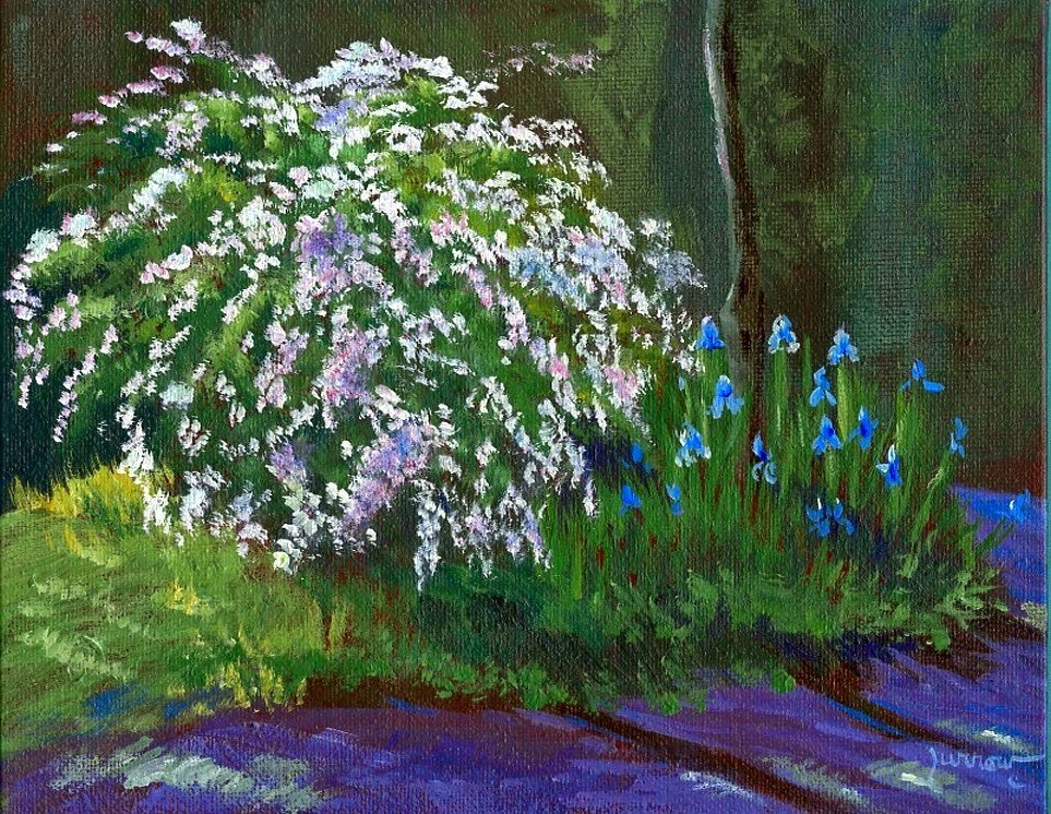 """Spirea and Iris on the Driveway"" original fine art by Sue Furrow"