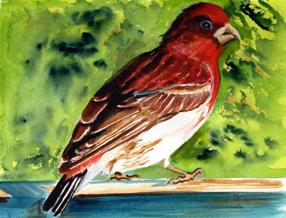 """Purple Finch"" original fine art by Bunny Griffeth"