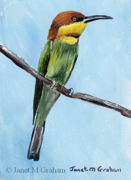 """""""Chestnut Headed Bee-Eater ACEO"""" original fine art by Janet Graham"""
