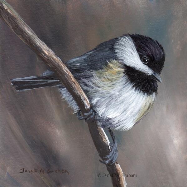 """""""Carolina Chickadee No 2"""" original fine art by Janet Graham"""