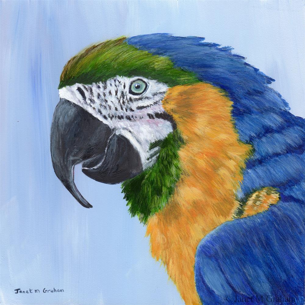 """Macaw"" original fine art by Janet Graham"