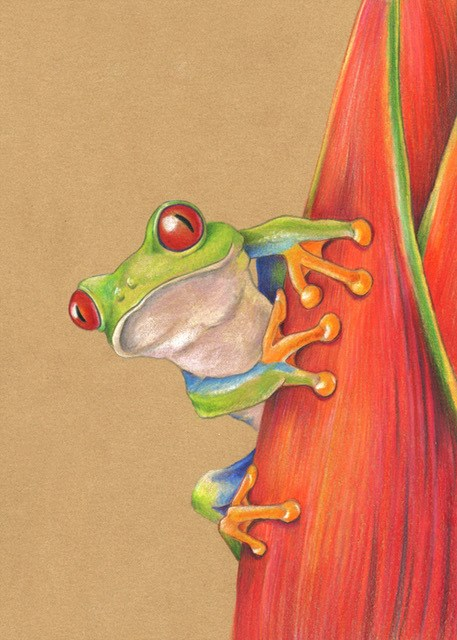 """Wildlife Art Frog,Illustrative Art, Nature ""Red-Eyed Tree Frog"" The Art of Nature, Fine Art  by Mind"" original fine art by Mindy Lighthipe"