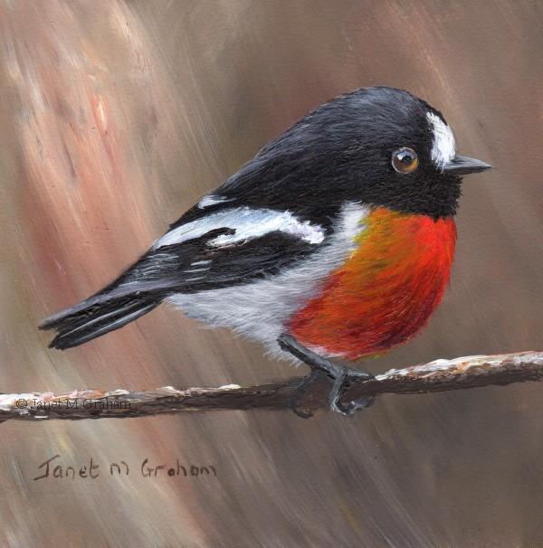 """Scarlet Robin No 11"" original fine art by Janet Graham"
