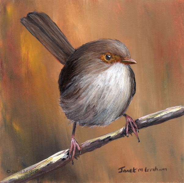 """Superb Fairy Wren (Female)"" original fine art by Janet Graham"