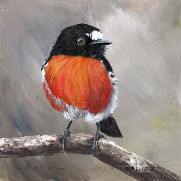 """Scarlet Robin No 12"" original fine art by Janet Graham"