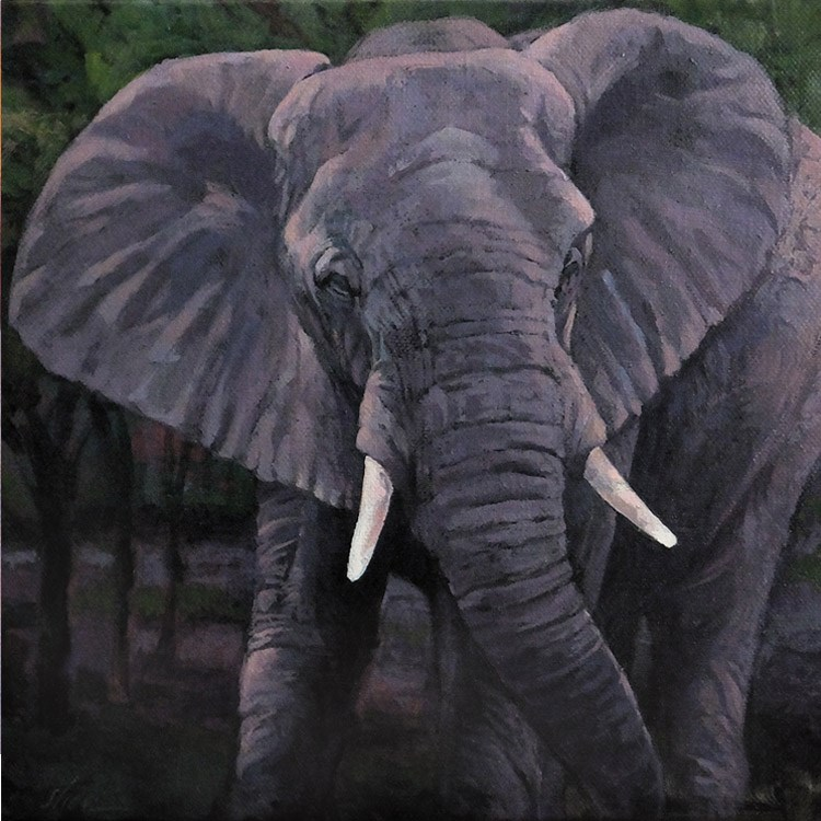 """""""Elephant Emerging"""" original fine art by Shawn Shea"""
