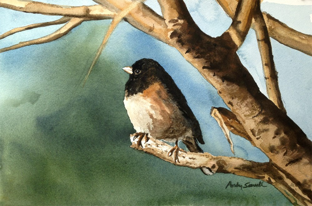"""""""J is for Junco"""" original fine art by Andy Sewell"""