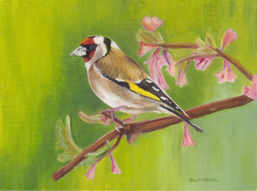 """Goldfinch"" original fine art by Janet Graham"